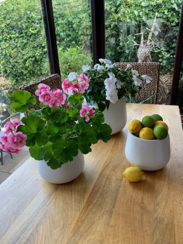 Verano-Ceramics-Indoor-Plant-Pots-Cylinder-White-Lifestyle-2