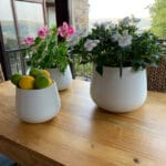 Verano-Ceramics-Indoor-Plant-Pots-Cylinder-White-Lifestyle-3