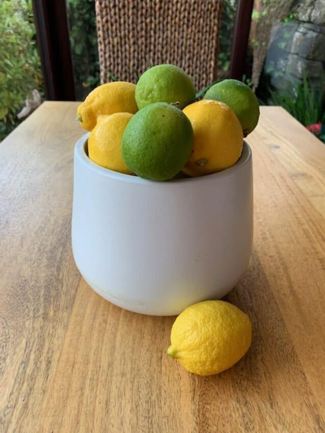 Verano-Ceramics-Indoor-Plant-Pots-Cylinder-White-Lifestyle-4