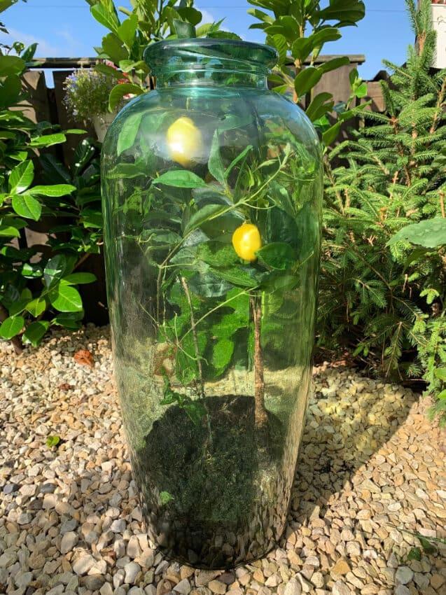 Verano-Ceramics-Teardrop-Rimma-Recycled-Glass-Large-Vase-Lifestyle-1