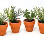 Verano-Spanish-Ceramics-Plain-Terracotta-Small-Plant-Pots-3